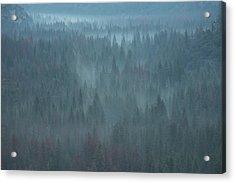 Mystical Forest Acrylic Print