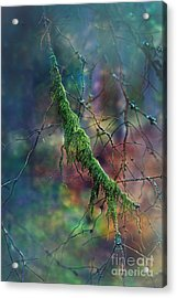 Mystical Moss - Series 1/2 Acrylic Print