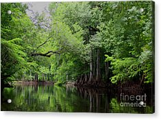 Mystical Withlacoochee River Acrylic Print