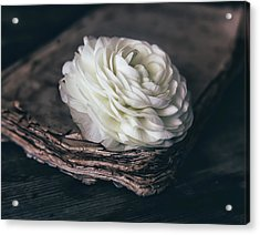 Acrylic Print featuring the photograph Mystique by Kim Hojnacki