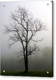 Mysty Tree 3 Acrylic Print by Marty Koch