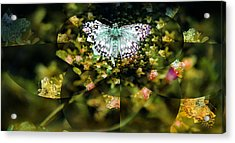 Mythical Butterfly  Acrylic Print by Rose  Hill