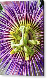 Nails Wounds And Thorns Acrylic Print by Dawn Currie