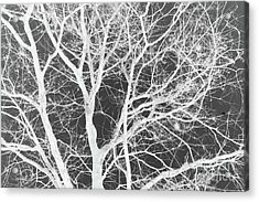 Naked Branch Acrylic Print by Dodie Ulery