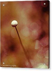 Naked Dandelion Acrylic Print
