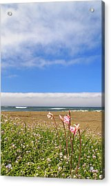 Acrylic Print featuring the photograph Naked Ladies At The Beach by James Eddy