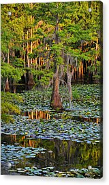 Acrylic Print featuring the photograph Naked by Skip Hunt