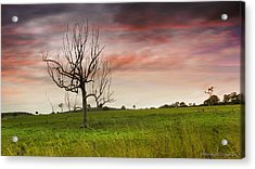 Naked Tree 01 Acrylic Print