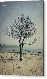 Acrylic Print featuring the photograph Naked Tree by Marco Oliveira