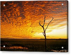 Naked Tree Acrylic Print by Phill Doherty