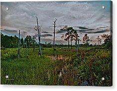 Naked Trees Swamp Acrylic Print