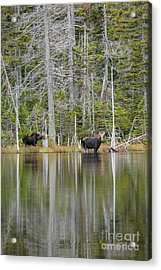 Nancy Pond - White Mountains New Hampshire Usa Acrylic Print