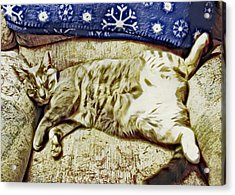 Nap Position Number 16 Acrylic Print by David G Paul