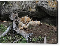 Acrylic Print featuring the photograph Nap Time by Steve Stuller