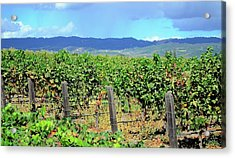 Acrylic Print featuring the photograph Napa by Corinne Rhode