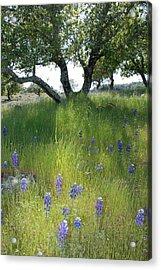 Napa Hills Meadow Acrylic Print