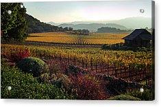 Napa Valley California Acrylic Print