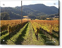 Napa Valley Vineyard . 7d9020 Acrylic Print by Wingsdomain Art and Photography