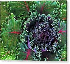 Naples Kale Acrylic Print