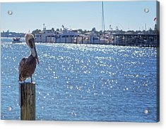 Acrylic Print featuring the photograph Naples Pelican by Lars Lentz