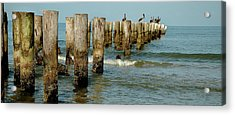 Naples Pier And Pelicans Acrylic Print