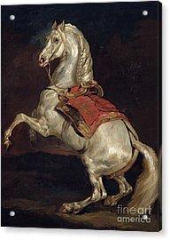 Napoleon's Stallion Tamerlan Acrylic Print