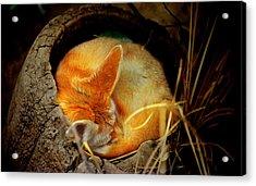 Napping Fennec Fox Acrylic Print