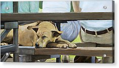 Naptime In The Bleachers Acrylic Print