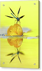 Narcissus - Damselfly Reflected In The River Acrylic Print by Roeselien Raimond