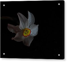 Acrylic Print featuring the photograph Narcissus by Susan Capuano