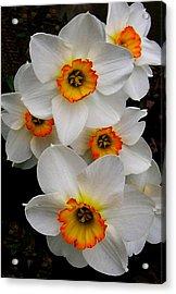Narcissus Tazetta Acrylic Print by Kathleen Stephens