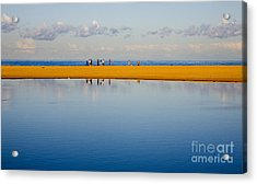 Narrabeen Dunes Acrylic Print by Sheila Smart Fine Art Photography
