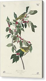 Nashville Warbler Acrylic Print by Rob Dreyer