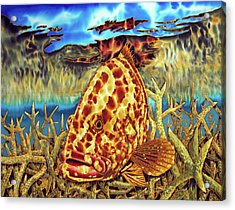 Nassau Grouper And Staghorn Coral Acrylic Print