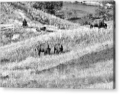 National Bison Range Wildlife Refuge Mt Usa Acrylic Print by Christine Till