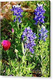 Acrylic Print featuring the photograph National Colors by Charles McKelroy