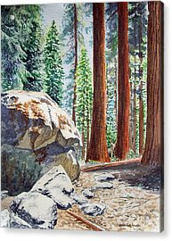 National Park Sequoia Acrylic Print