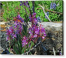 Acrylic Print featuring the photograph National Parks. From The Ashes To New Life. by Ausra Huntington nee Paulauskaite