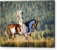 Native American On His Paint Horse Acrylic Print by Nadja Rider