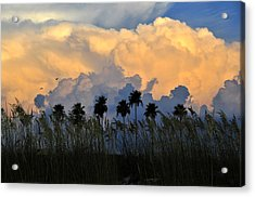 Native Florida Acrylic Print by David Lee Thompson