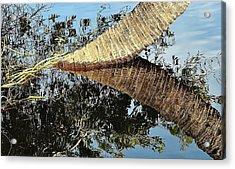Natural 10 17h Acrylic Print