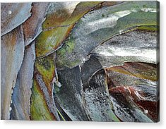 Natural 4 15 Acrylic Print