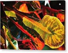 Natural 9 17c Acrylic Print