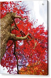 Natural And Attractive 3 Acrylic Print