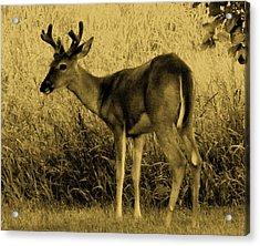 Natural Beauty- Vintage Version Acrylic Print