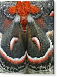 Natural Creation Acrylic Print