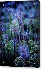 Natural Fireworks 4791 H_2 Acrylic Print