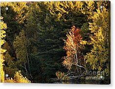 Acrylic Print featuring the photograph natural Framing by Aimelle