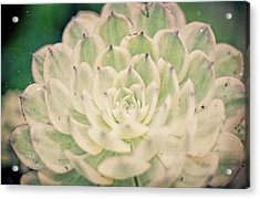Acrylic Print featuring the photograph Natural Geometry by Ana V Ramirez