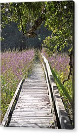 Acrylic Print featuring the photograph Natural Healing by John Knapko